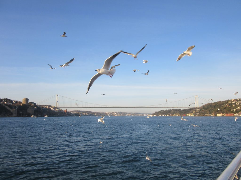 1. Seagulls welcoming us in Istanbul