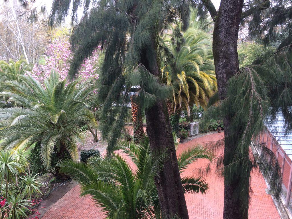 6. Beatiful palm trees